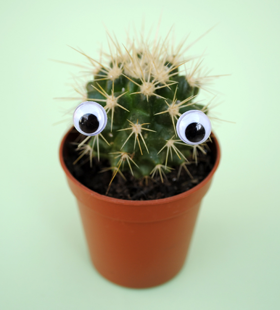 Cute cactus